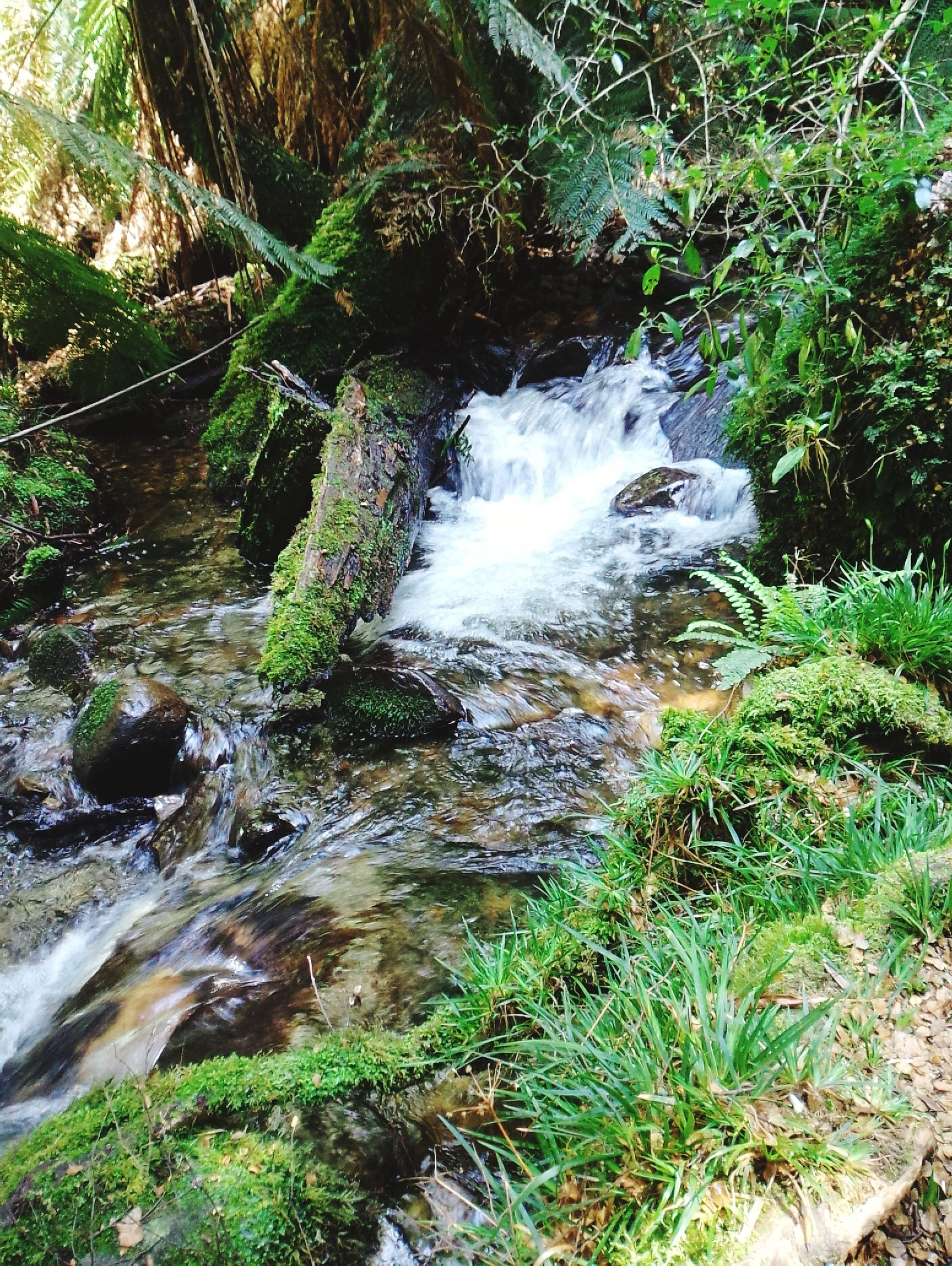 water, flowing water, motion, waterfall, rock - object, plant, flowing, nature, stream, beauty in nature, long exposure, forest, growth, high angle view, grass, moss, day, outdoors, scenics, tranquility
