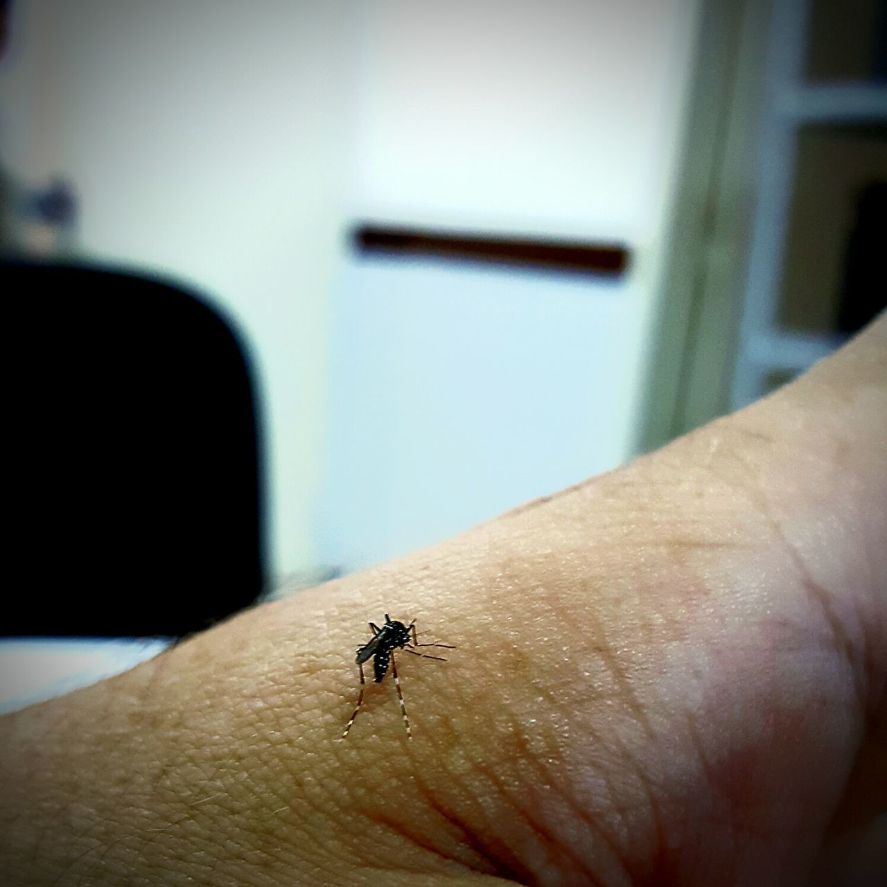 Insect Animal Themes Human Body Part One Animal One Person Day Close-up Adult People Human Hand Adults Only Only Men Indoors  One Man Only Nature Mosquito Aedes Aegypti Mao Hand Inseto Insetosdobrasil