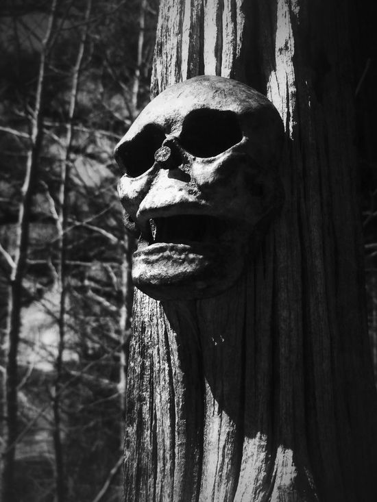 Blackandwhite Beauty Of Decay Rural Scenes I Want Your Skull