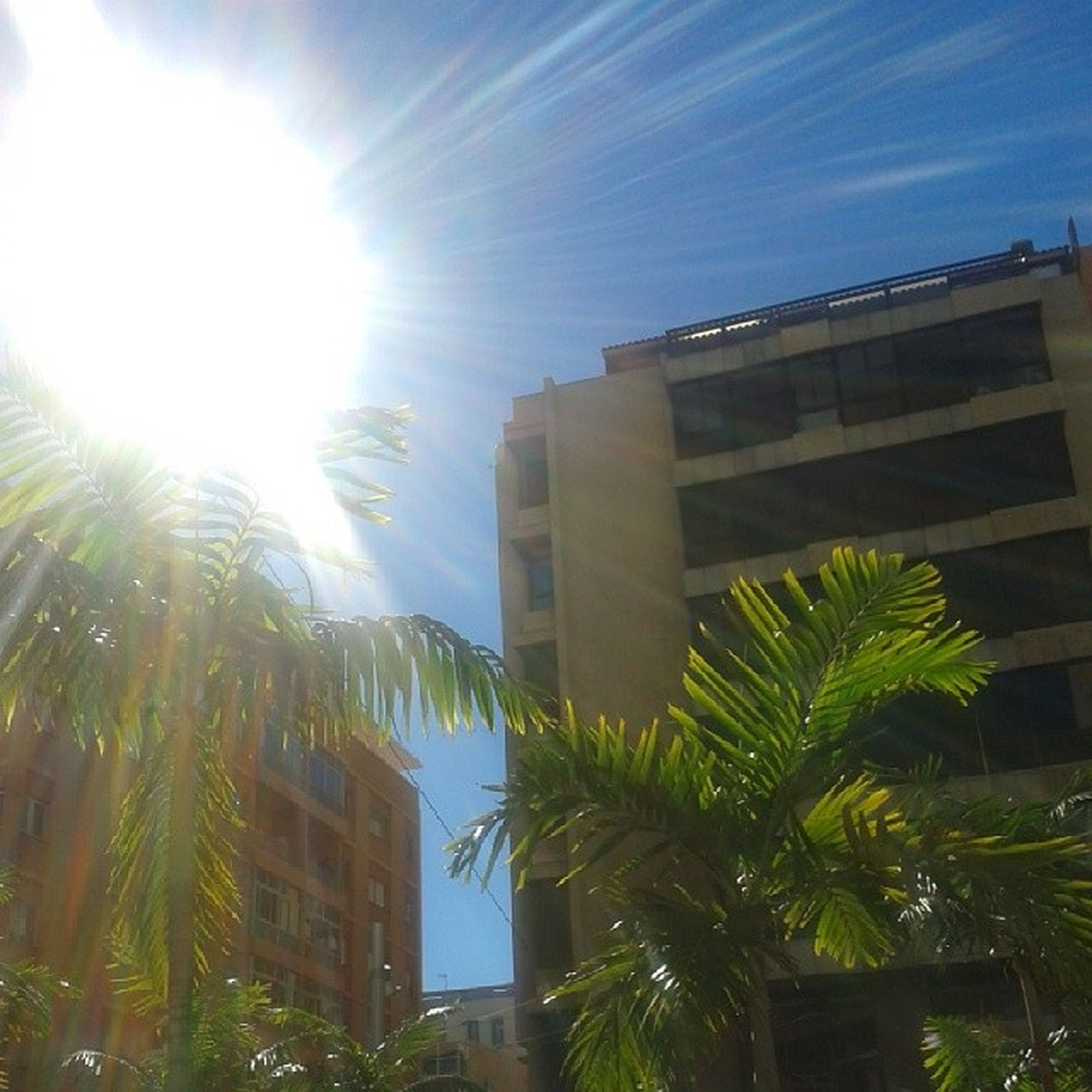 building exterior, architecture, sun, built structure, sunbeam, low angle view, sunlight, lens flare, tree, palm tree, sunny, sky, building, bright, growth, city, blue, day, residential building, house