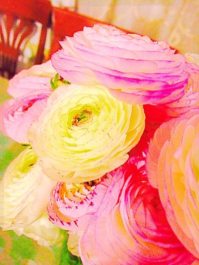 Spring Flowers Flower Collection Flowers Colection Loving Flowers EyeEm Nature Lover