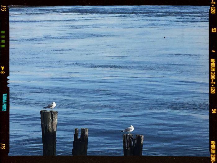 winter birds On The Run Tadaa Tadaa Community