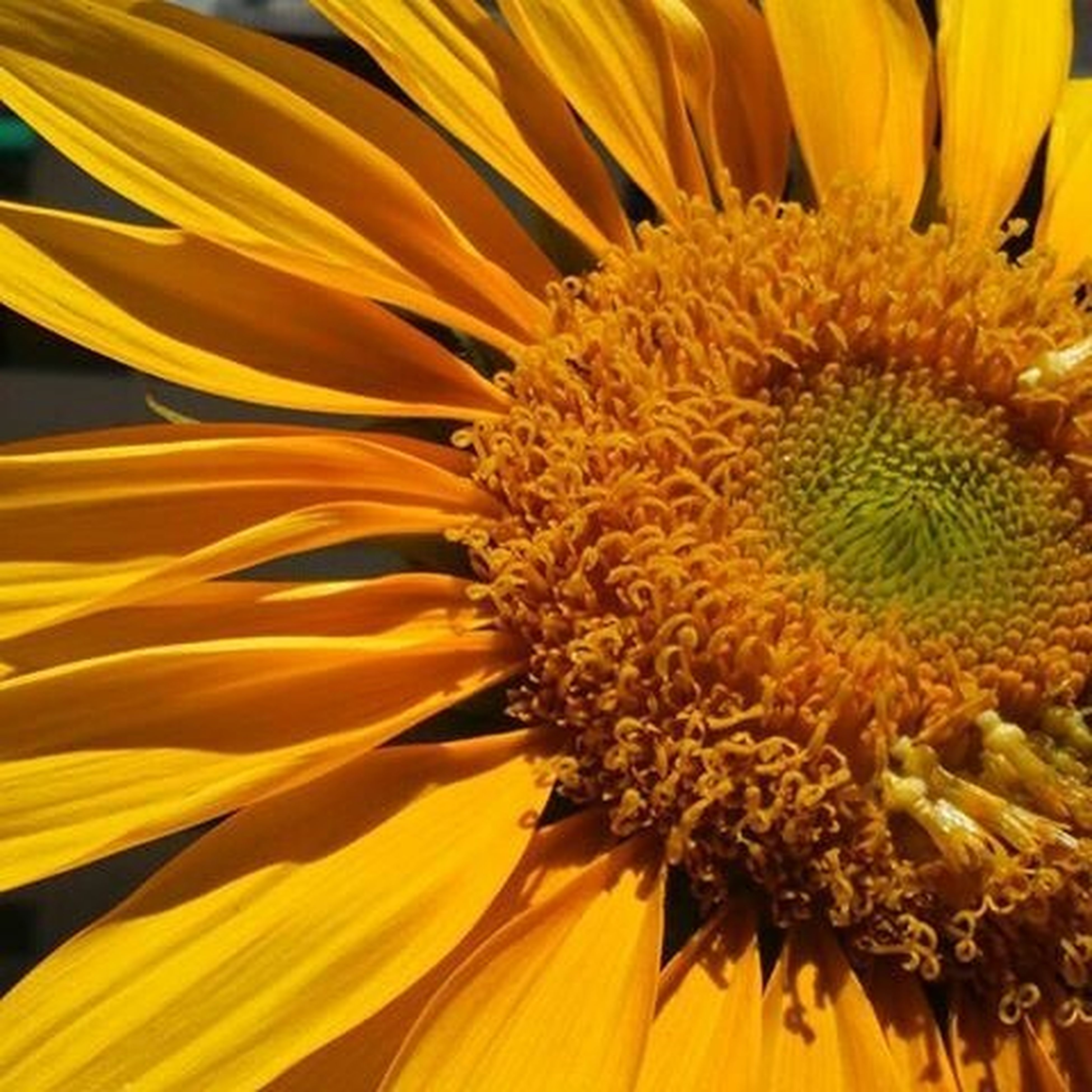 Myautobiography Like4like Flowerslike Naturelive Naturelike