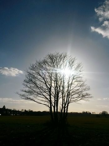 Tree Nature Sun Sun Behind The Tree Landscape No People Single Tree Day Cold Beauty In Nature