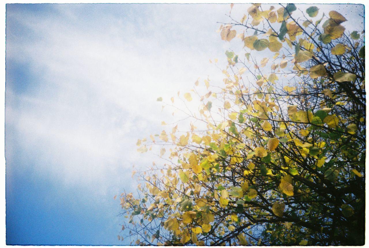 Film Photography Lomography Lomo LC-A Kodakfilm Sky Tree Freshness Auntumn