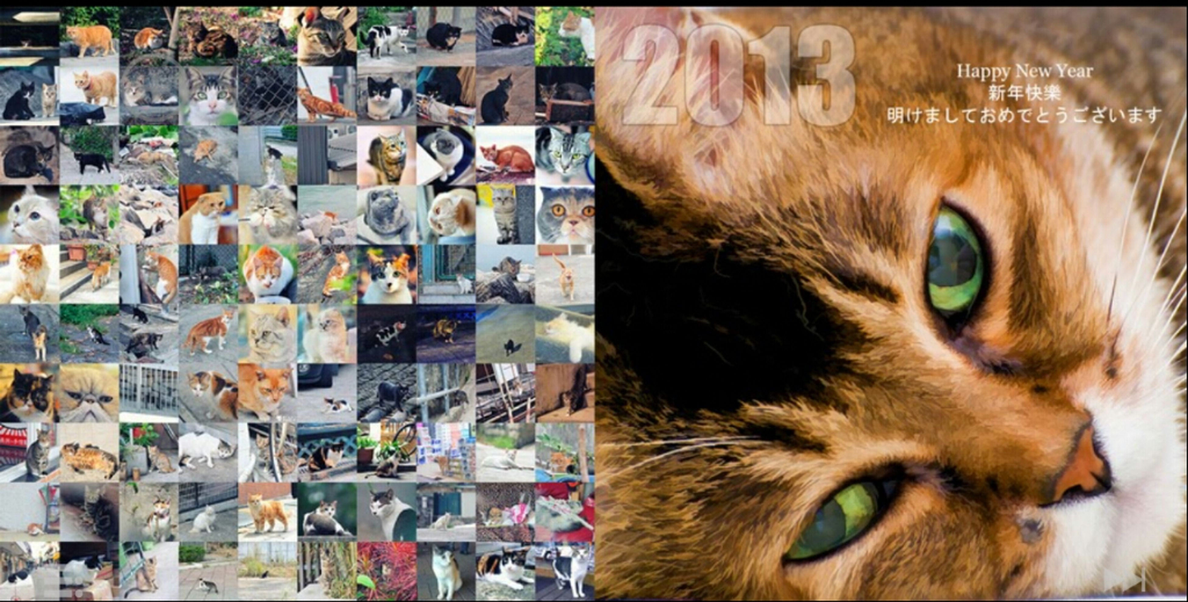 domestic animals, animal themes, pets, mammal, one animal, looking at camera, portrait, indoors, domestic cat, close-up, cat, focus on foreground, retail, no people, animal head, abundance, for sale, large group of objects, day