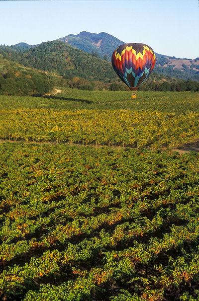 Adventure Grape Fields Hot Air Balloon Napa Valley Fall Napa Valley Vineyard Vacation First Eyeem Photo