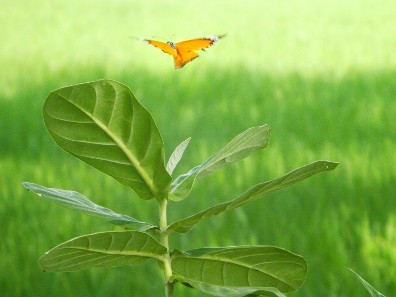 NikonCoolpixL120 Close Up Hopes And Dreams Butterfly Fly Away..... Butterfly ❤ Macro Beauty Conceptual Butterfly Macro The Rise Of Nature Creative Photography Butterfly Collection Close To Nature Negetive Space Isolation Imperfection Macro_collection Green Background Soft Pastel  Pastel Power Pastel Colors 43 Golden Moments Minimalism Photography Fly Away Feel The Journey Jessore Bangladesh