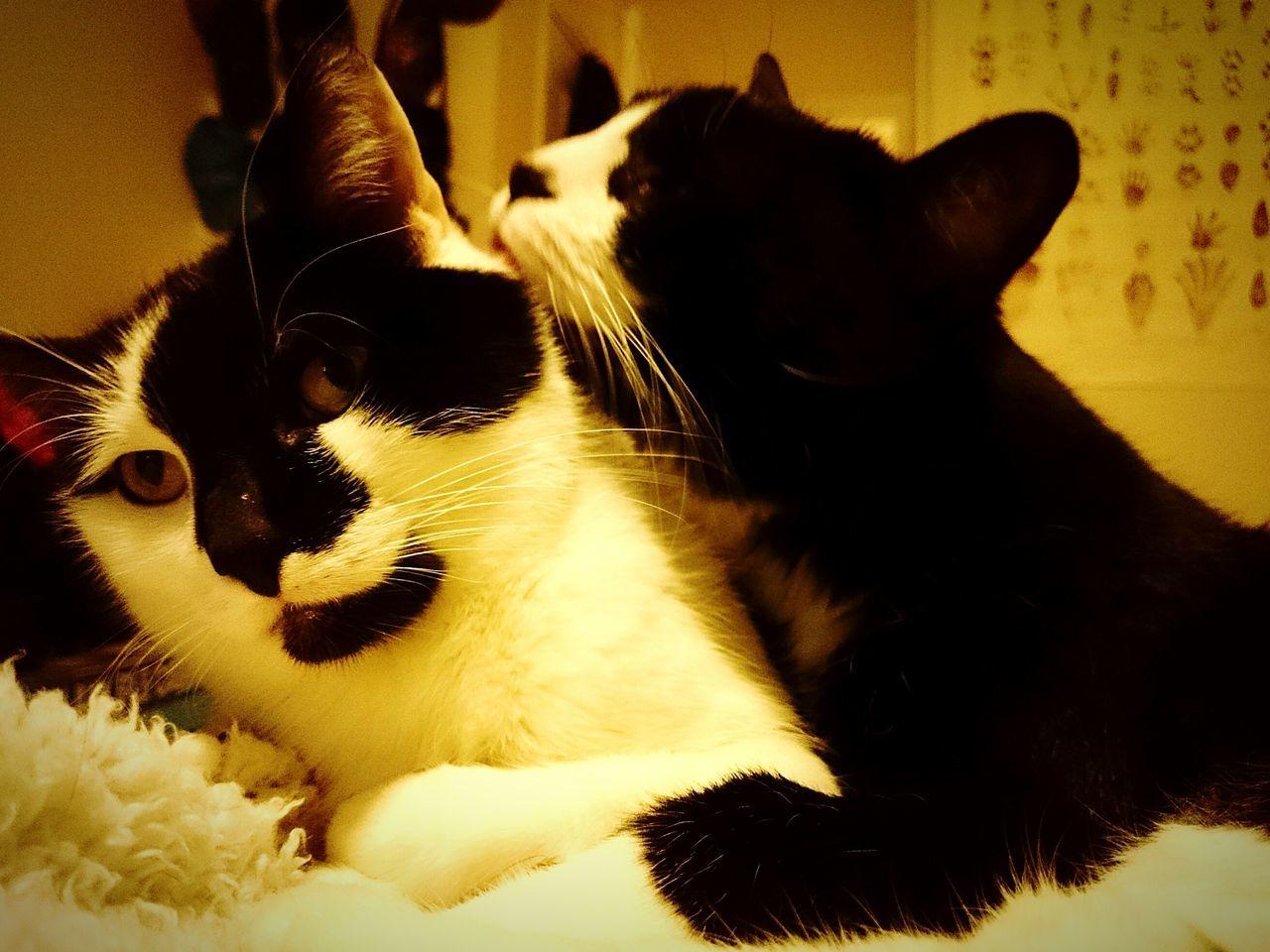 Happy Valientine's Day.... Pets Corner Cats Furbabies My Cats Petsinmylife