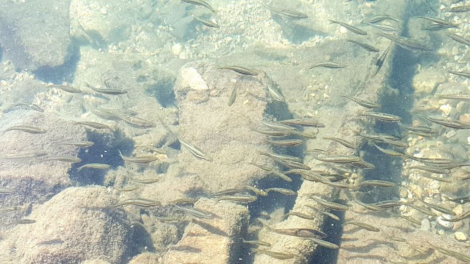 Minnows Trout Taking Photos Clear Creek Fish Check This Out Enjoying Life Naturelovers Aprilphotochallenge EyeEm Best Shots Frommypointofview Taking Photos Nature Photography Herefishyfishy Water - Collection From My Point Of View Bestofeyem April 2016 April Showcase