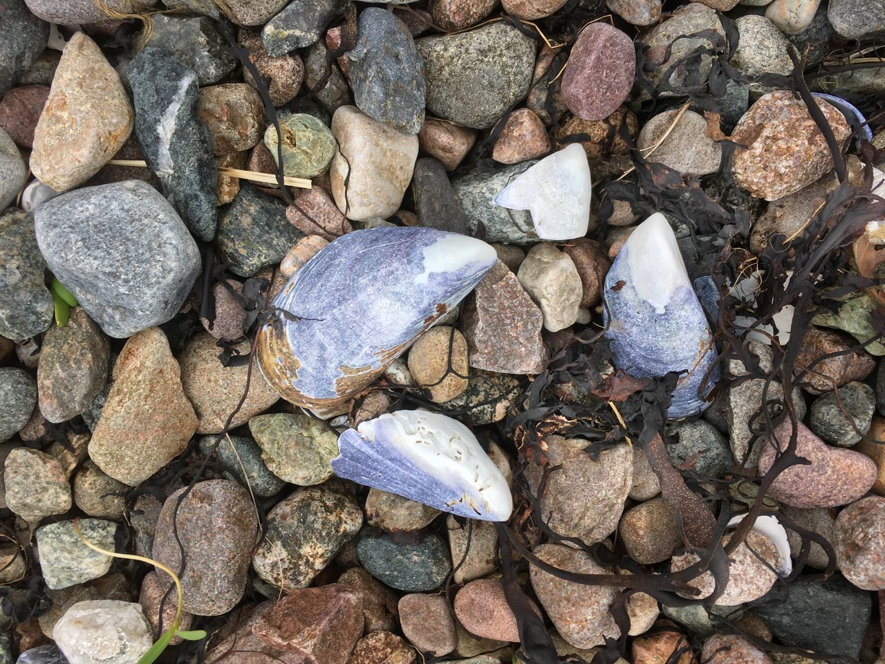 stone - object, rock - object, pebble, no people, day, nature, outdoors, close-up, pebble beach