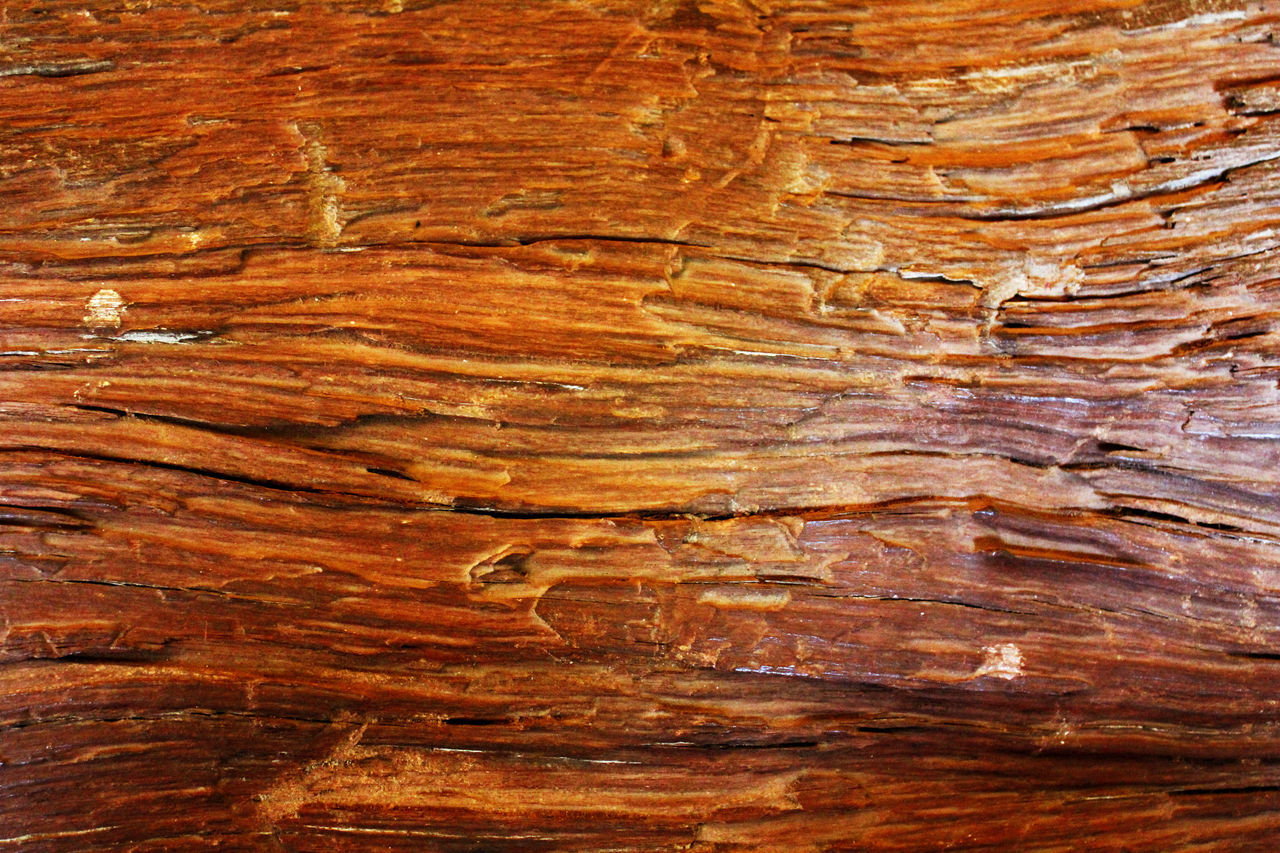 backgrounds, textured, nature, striped, pattern, wood grain, no people, wood - material, rough, brown, close-up, hardwood, outdoors, day