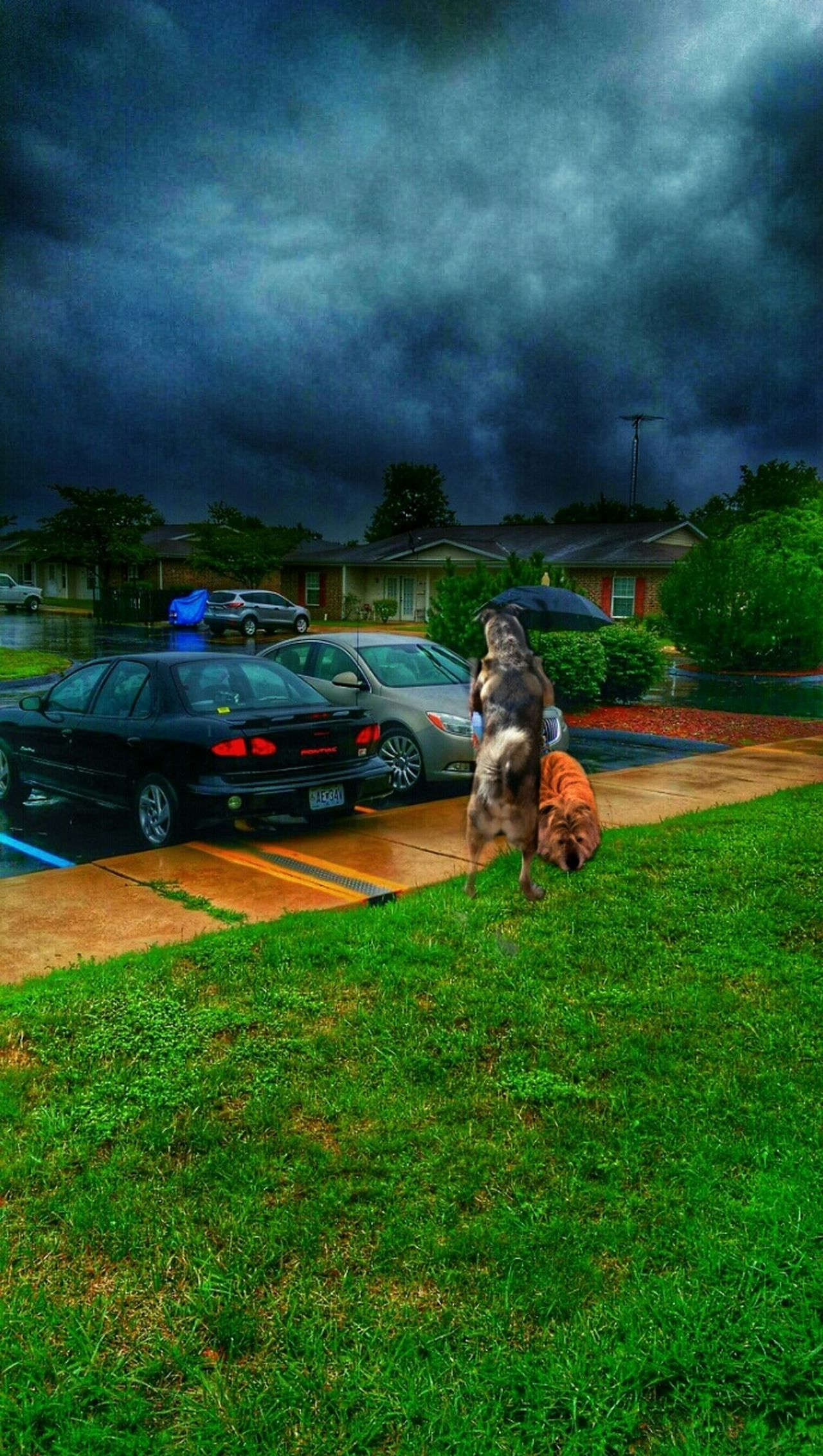 """https://youtu.be/7lPuYSSWNh8 """"Now that it's rainin' more than ever, we'll still have each other..."""" The K9GB My Dogs Are Cooler Than Your Kids Best Friends Family Matters The Impurist Rainy Day Stormembracing Skylovers Dark Clouds Dark Trees Darkness And Life We Are Nature Street Photography Musical Photos Lyricalartistry"""