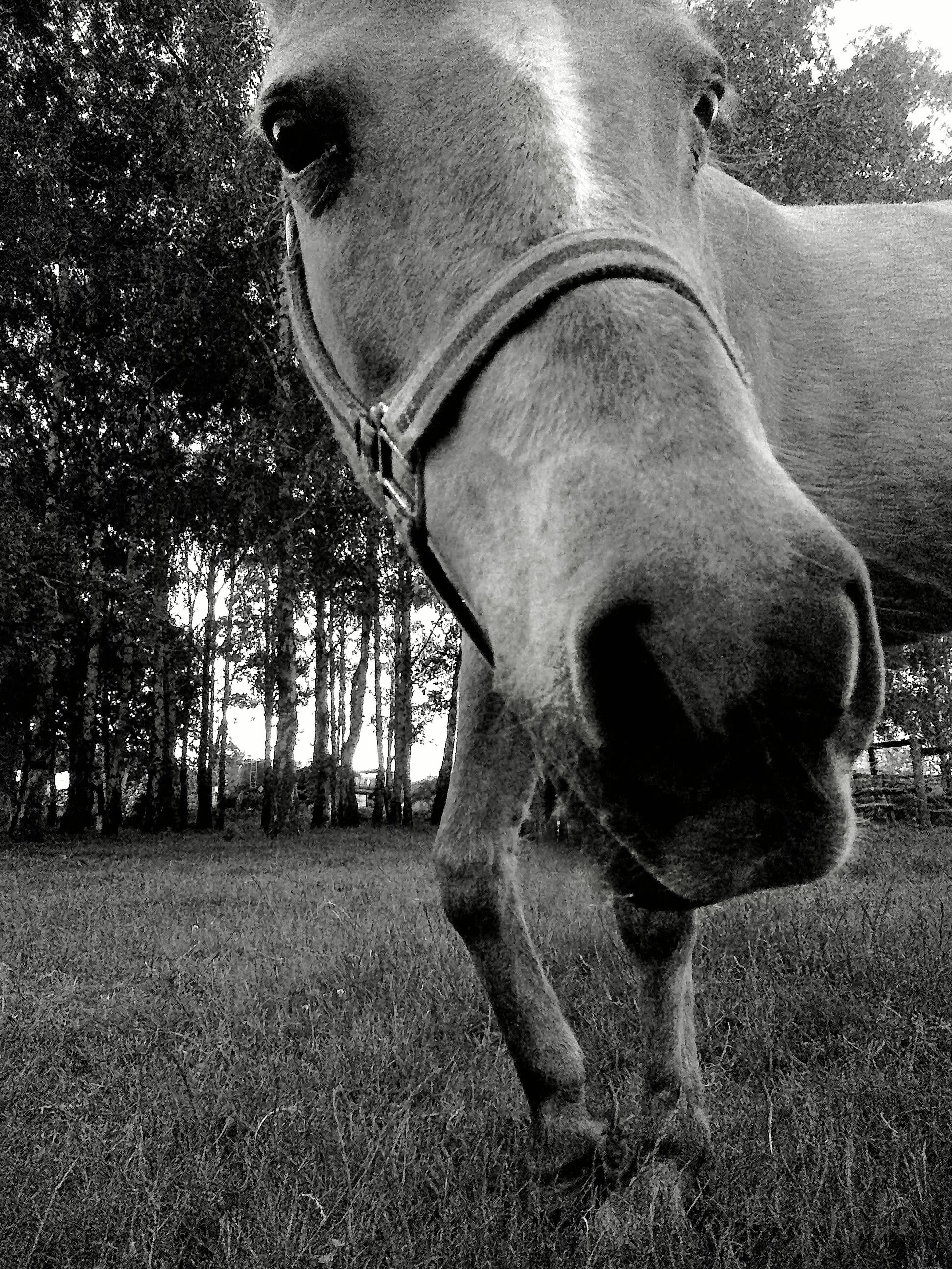 horse, mammal, animal themes, domestic animals, one animal, tree, animal head, sunlight, herbivorous, livestock, field, standing, day, close-up, outdoors, working animal, no people, animal body part, sky, sculpture