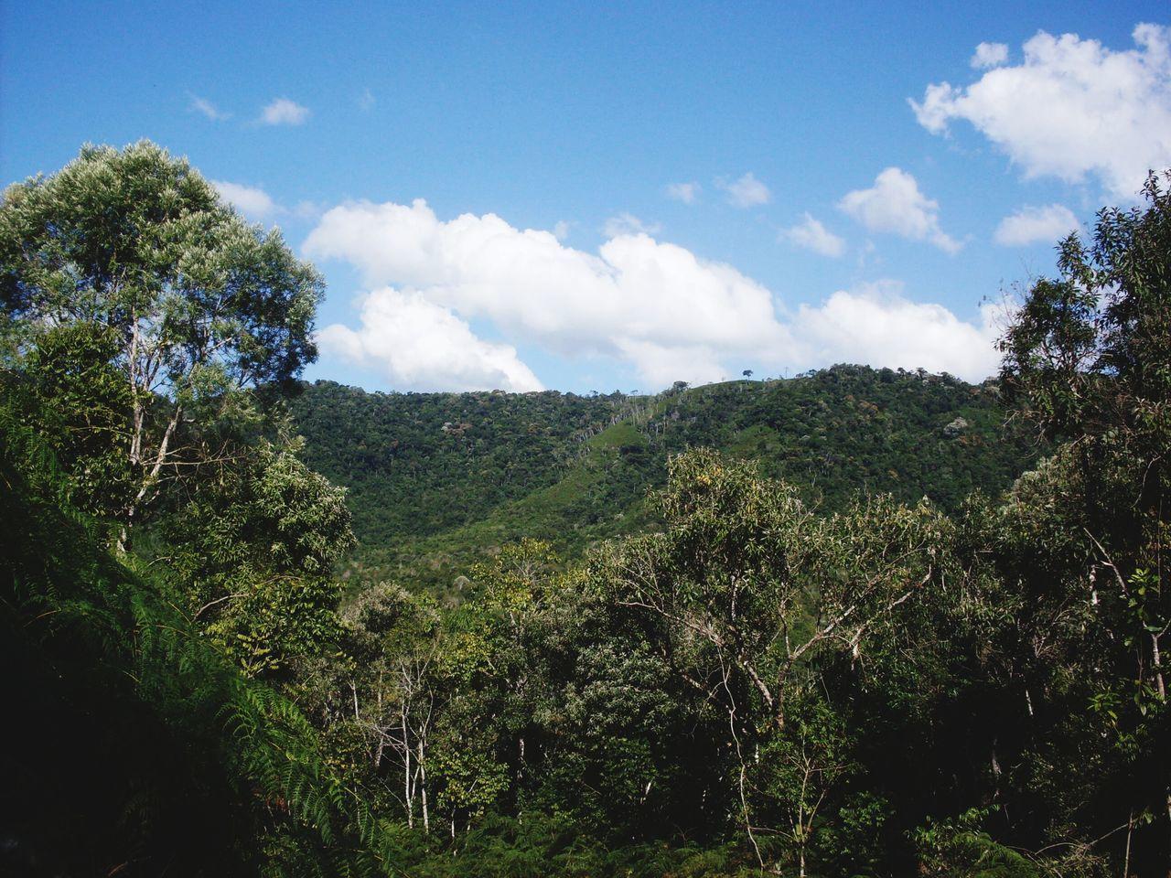 Edge Of The World Floresta Arvores... 🌿❤ Mata Ceu Azul Ceu Liindo! Forest Woods Sky Sky And Clouds