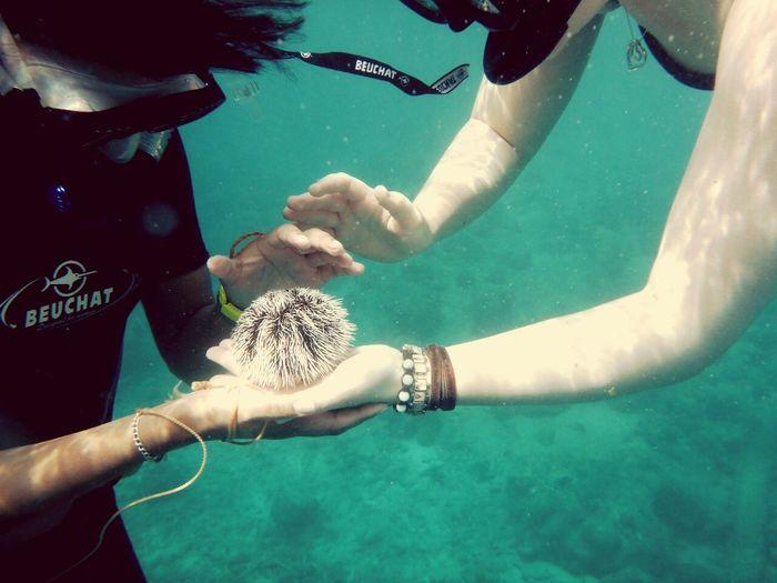 Share Your Adventure Sealife Seaeagle Love Adventure Underwaterlife Snorkeling