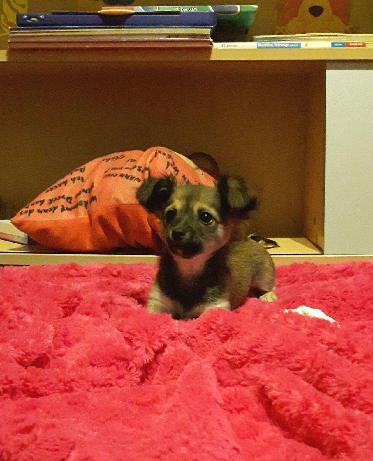 Irgendwie muss man doch wieder vom Bett runter kommen 😊😊 Pets One Animal Mammal Animal Themes Dog Hundewelpe Hunde Dog Photography Hundefotografie Dog Lover Pets Of Eyeem