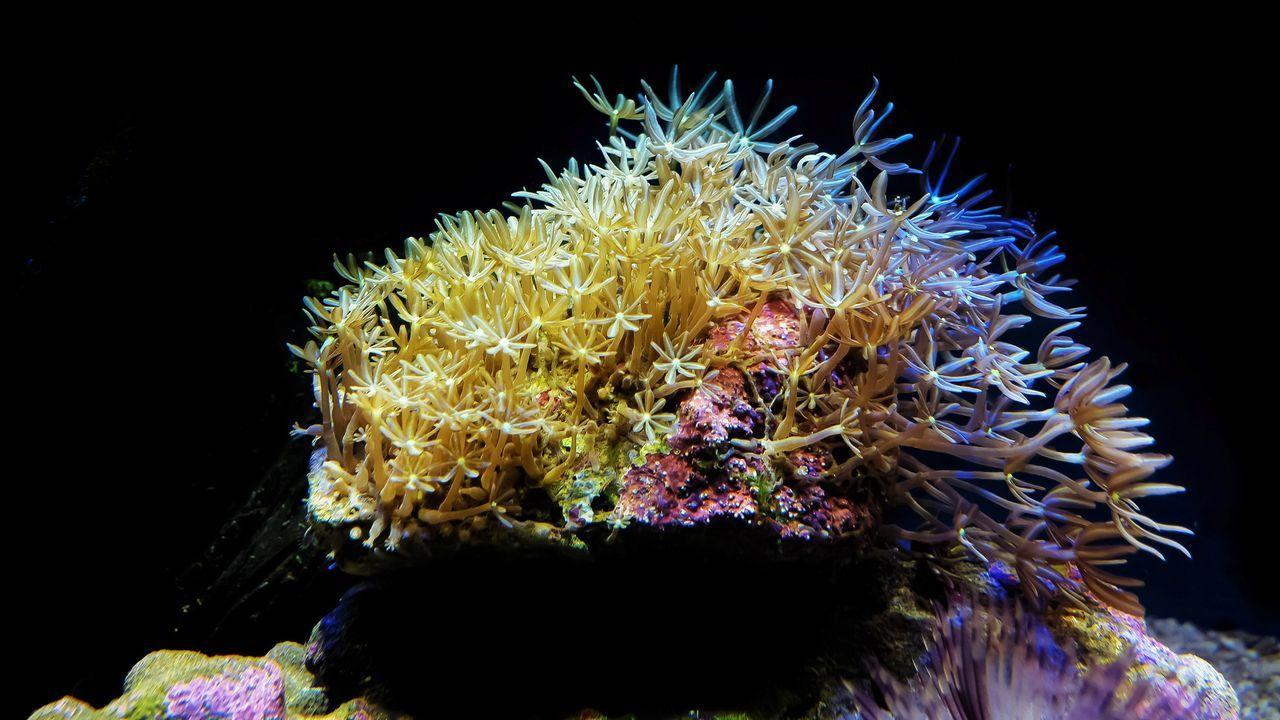 Coral UnderSea Underwater Marine Aquarium Marine Life Rainbow Colors Multi Colored Sea Life Black Background Close-up