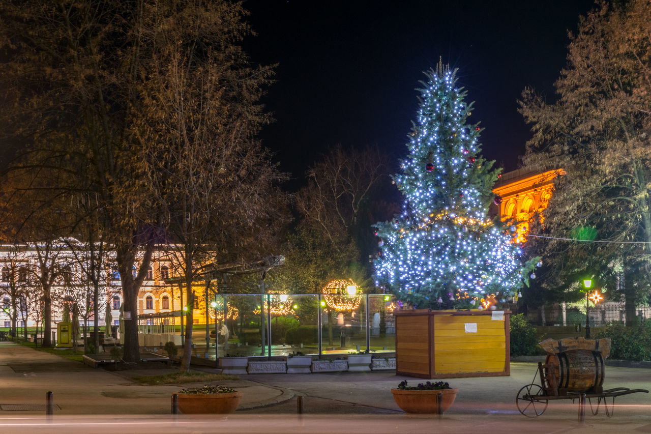 Hollidays Illuminated Long Exposure Night Outdoors Serbia Serbian History Sremski Karlovci Town Square Tree Vojvodina