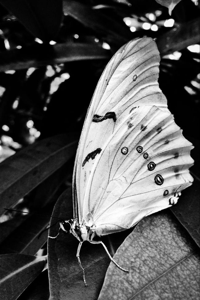 beauty at the edge ✨ Blackandwhite Butterfly Nature_collection EyeEm Nature Lover