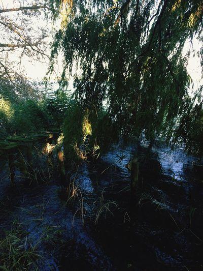 Loveit Homesweethome Schaalsee 💦🌾🌾