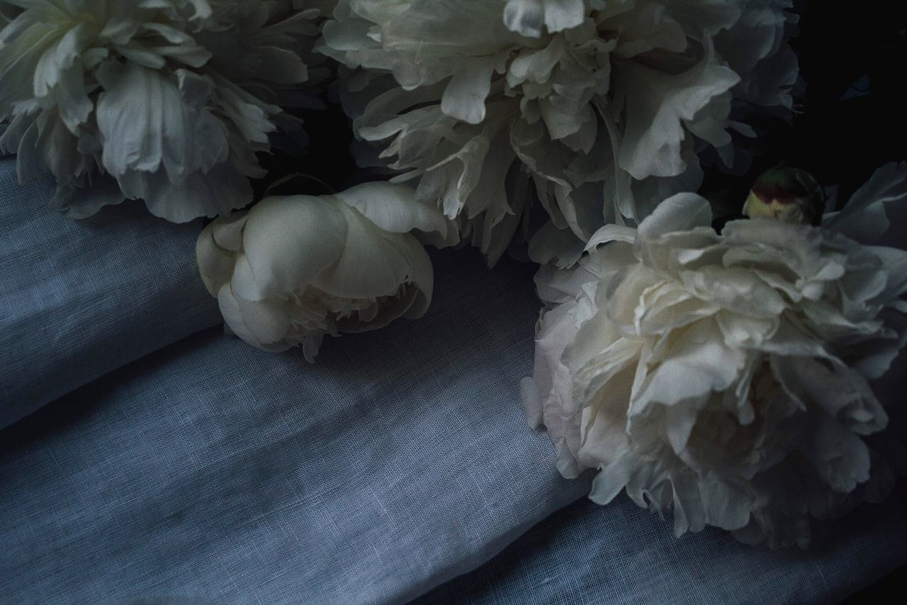 Flowers Moody VSCO Onmytable Conceptual Light And Shadow Floral Beauty In Nature Flower Head EyeEm Best Shots EyeEm Best Edits Interior Decorating