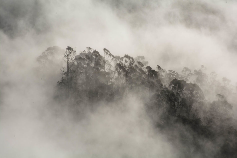Beautiful stock photos of san francisco, Beauty In Nature, Branch, Day, Fog