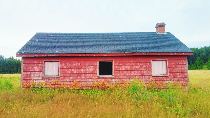 Charming History Through The Lens  Countryside Red Lilies In Bloom Old Barn Rustic Beauty Deserted