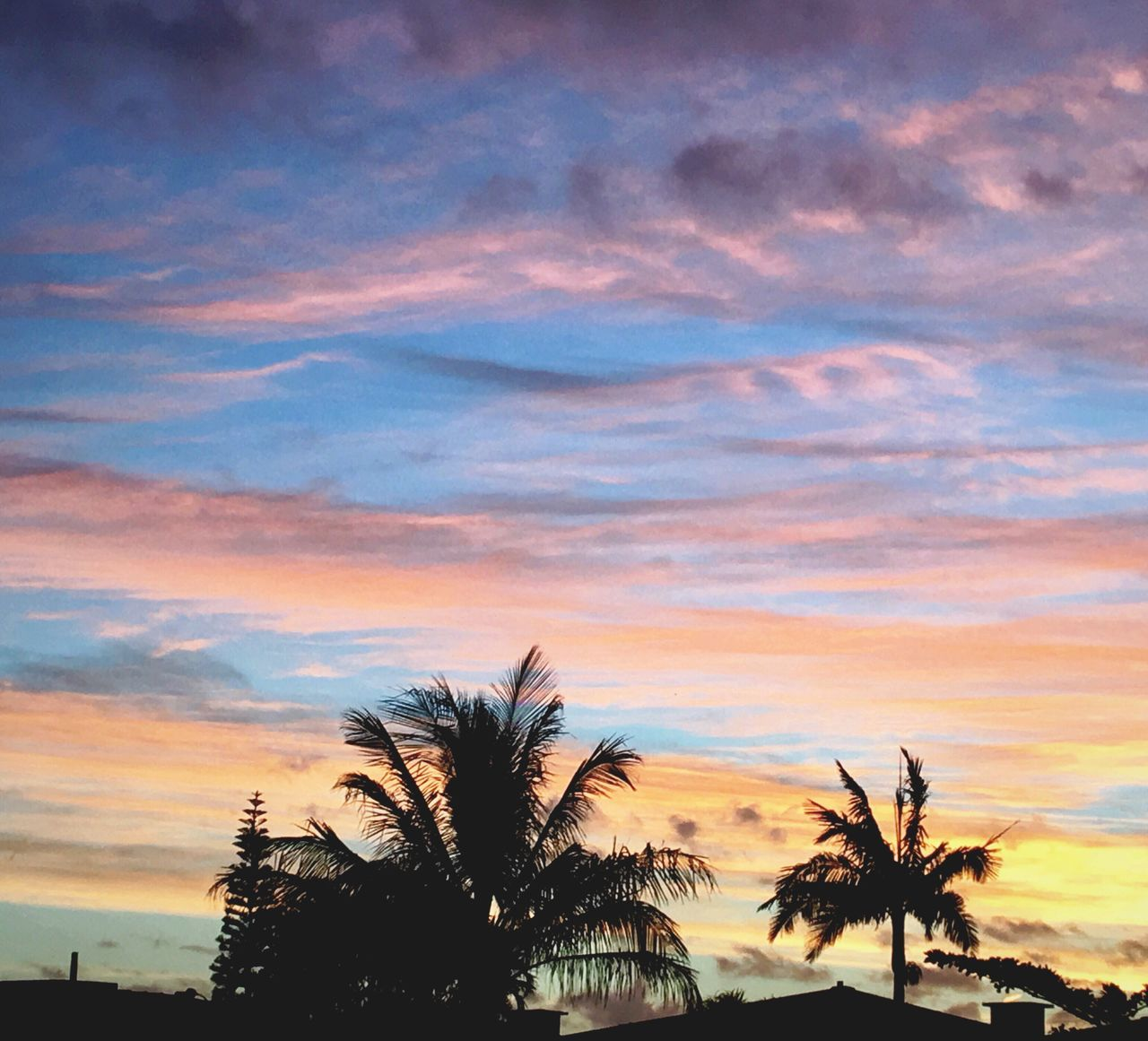 Sky Sunset Cloud - Sky Scenics Nature Tree Beauty In Nature Tranquility Palm Tree No People Tranquil Scene Outdoors Beach Day Light Brazil Clear Sky EyeEm Gallery EyeEm Eye4photography  Cityscape Beauty In Nature Nature Silhouette