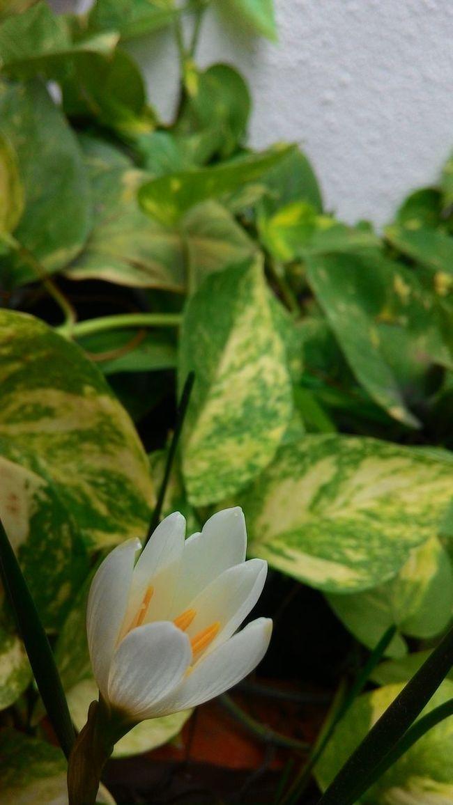White Flower Eye4photography  Green Green Green!  Puneclickarts Puneinstagrammers