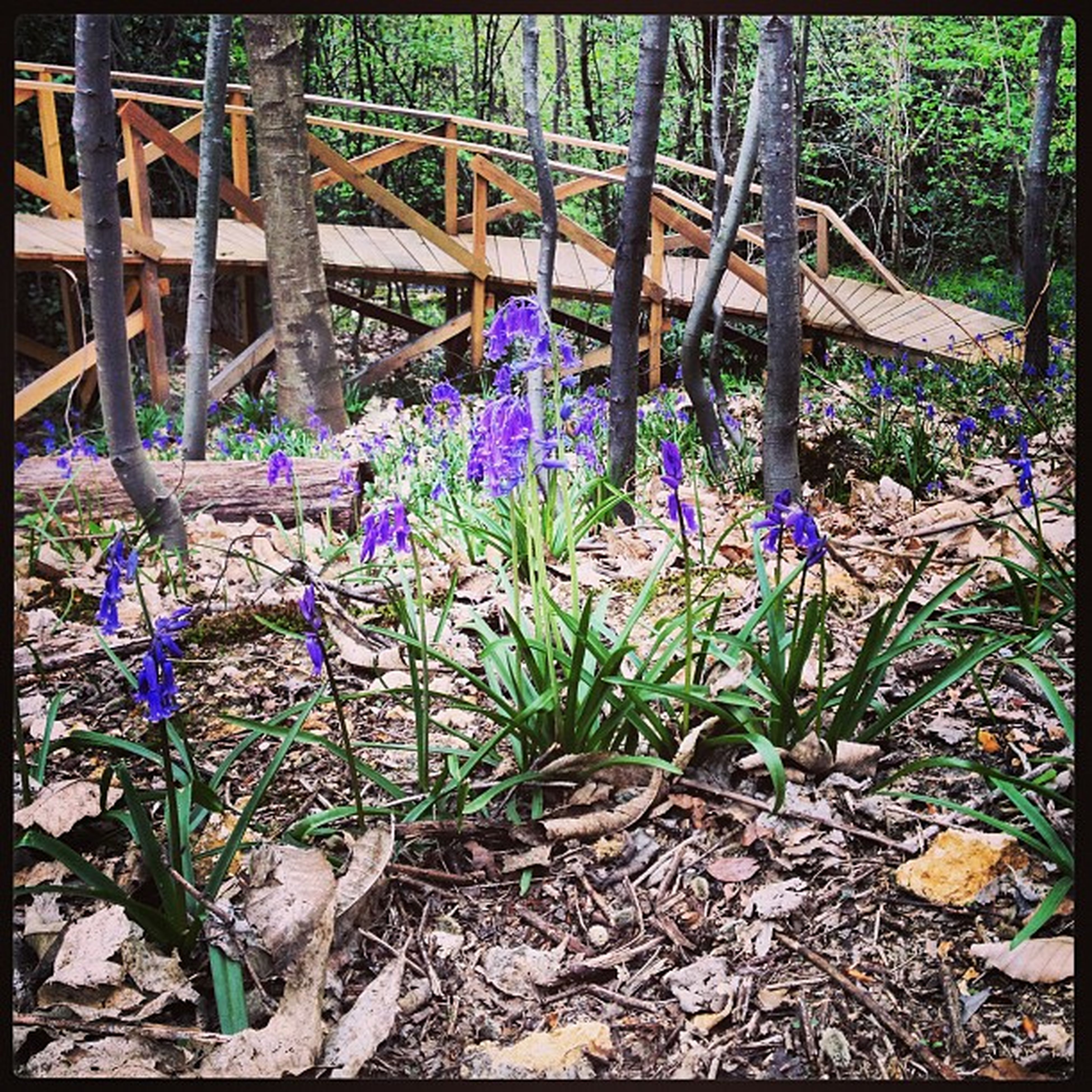 flower, purple, plant, growth, wood - material, fragility, nature, transfer print, auto post production filter, beauty in nature, day, fence, freshness, no people, outdoors, front or back yard, blooming, sunlight, blue, wood