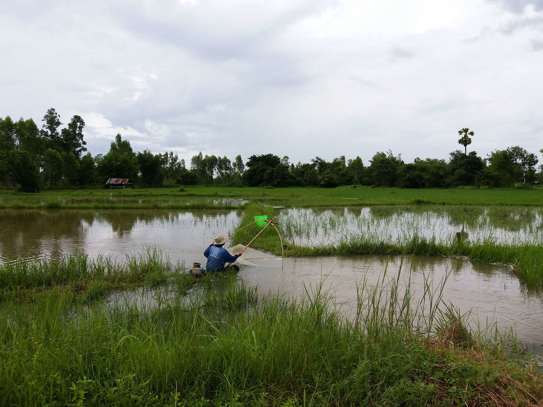 Reflection Agriculture Lake Water One Person Crop  Farmer Working Occupation Nature Rural Scene Outdoors Social Issues Men Plant Full Length People One Man Only Day Landscape Far Green Color Thailand Thaistyle Nature