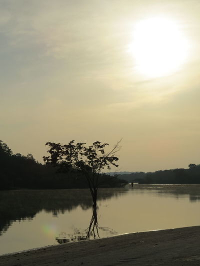 Amazon Amazon Rainforest Amazon River Amazonas Amazonas-Brasil Brazil Nature At Its Best Reflection Sun Sunset Travel The World