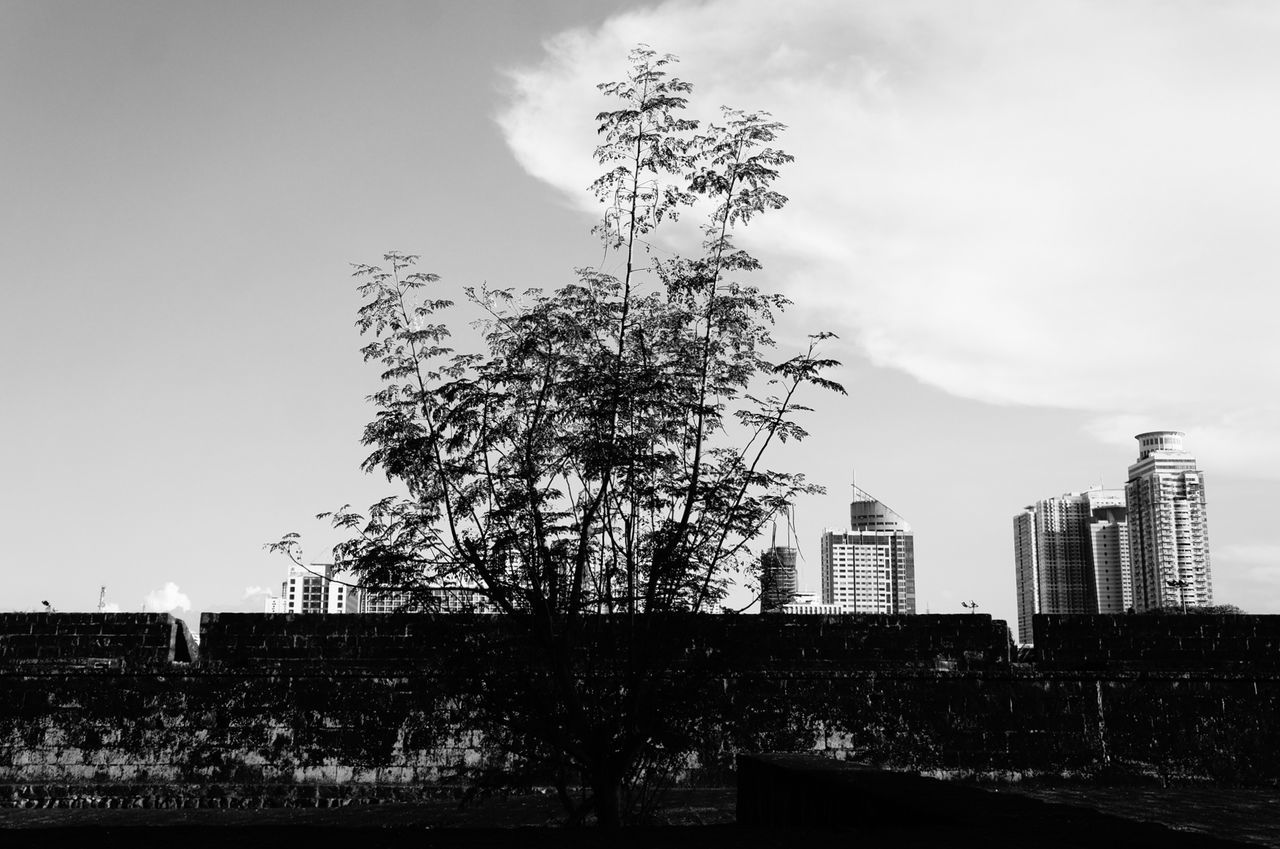 Tree over the historical wall of Intramuros. First Eyeem Photo Intramuroswalls Intramuros,manila Historical Monuments Park Historical Place Landscape_photography Building Landscape Sky Day Outdoors Nature No People Architecture Water Trees Silhouette Silhouettes Silver  Silence Silouette & Sky Silhouette_collection Silhouette Photography Silent Moment