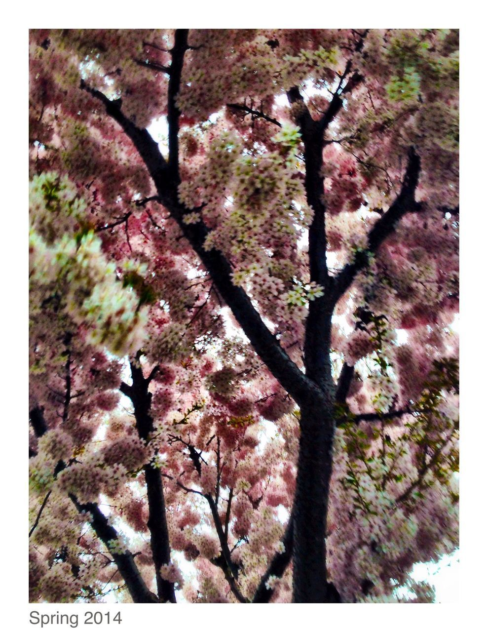tree, branch, flower, blossom, no people, springtime, low angle view, fragility, close-up, nature, day, outdoors, beauty in nature, growth, pink color, sky, freshness