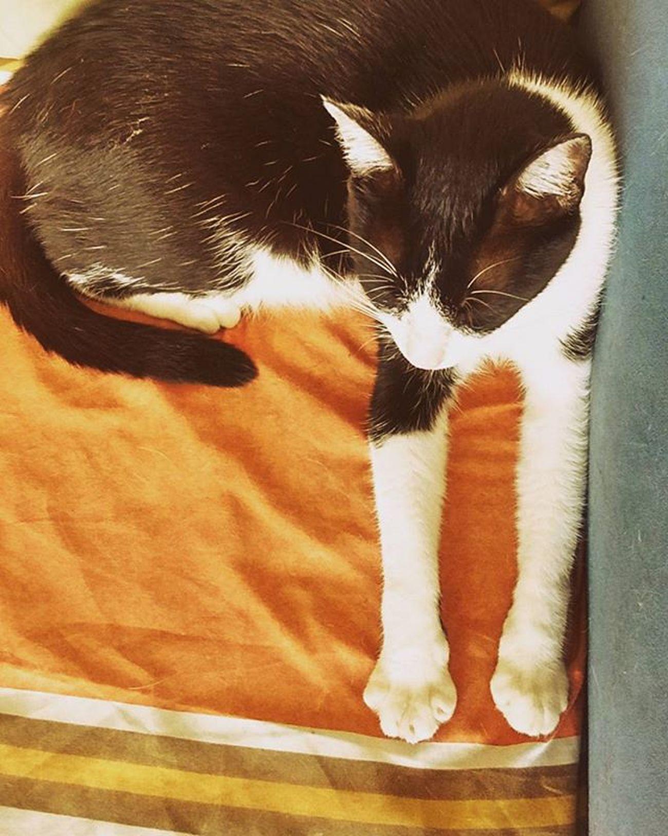Só relaxando Cats Catloversworld Instagramcat
