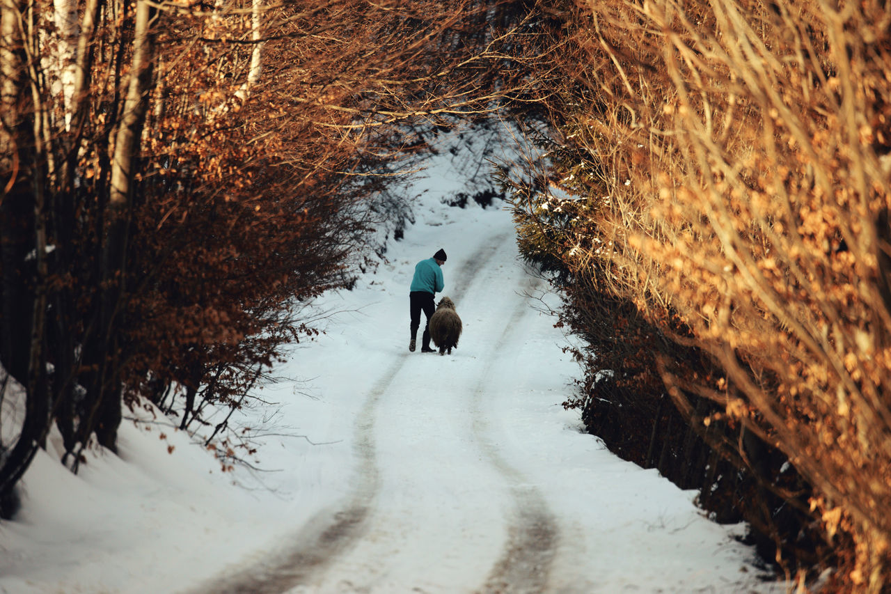 Animal Themes Beauty In Nature Cold Temperature Day Domestic Animals Landscape Landscape_Collection Mammal Mountain Nature Nature_collection One Person Outdoors People People And Places Peoplephotography Real People Relaxing Shadow Shepherd Snow Snow ❄ Togetherness Tree Winter