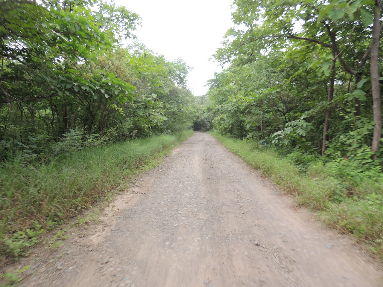 Beauty In Nature Dirt Road EyEmNewHere Forest Grass Green Color India Landscape Nature No People Non-urban Scene Outdoors Road The Way Forward Tree Without Edit ^^