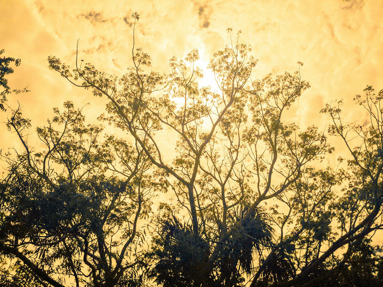 Nature Beauty In Nature No People Growth Sun Silhouette Sky Outdoors Tree Close-up Day ISO