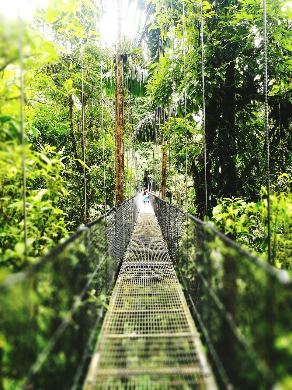 the way forward, tree, green color, day, footbridge, outdoors, growth, built structure, nature, architecture, no people, beauty in nature