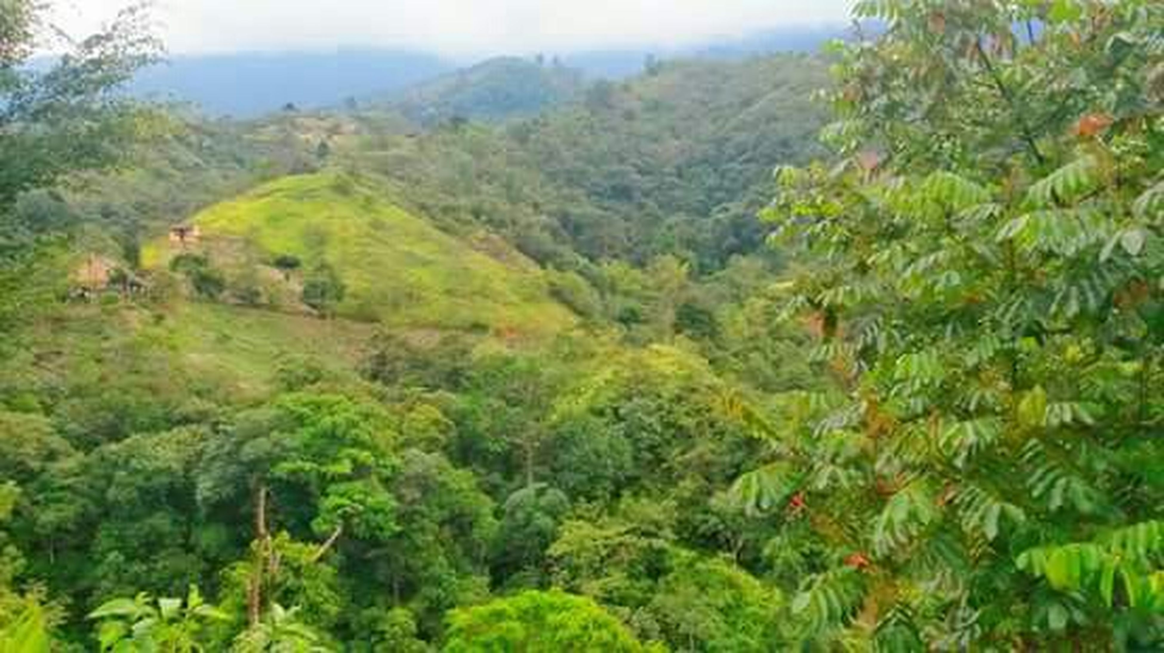 mountain, tree, tranquil scene, tranquility, green color, scenics, beauty in nature, lush foliage, nature, growth, landscape, mountain range, forest, non-urban scene, idyllic, green, valley, sky, day, high angle view