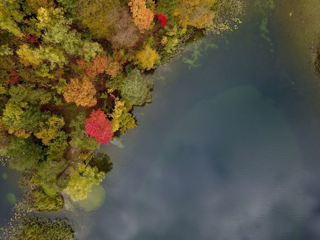 Autumn by a lake Nature Beauty In Nature Water Autumn Tree Reflection Tranquil Scene Tranquility Scenics Leaf No People Day Outdoors Lake Change Growth Sky