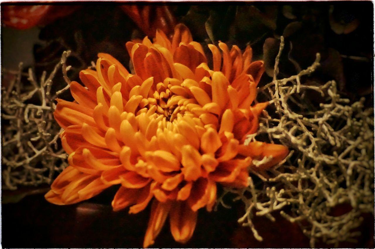 Blüte Gesteck ( Vivitar 70-200mm, f4,5-5,6 adaptiert an E-Mount ) Heikobo Blüte Vivitar70210
