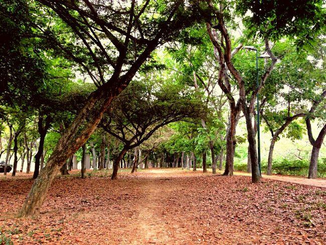 Pathway EyeEm Nature Lover Beatiful Nature Walk This Way Take Me There  Softlight  Cool Mood  Woods