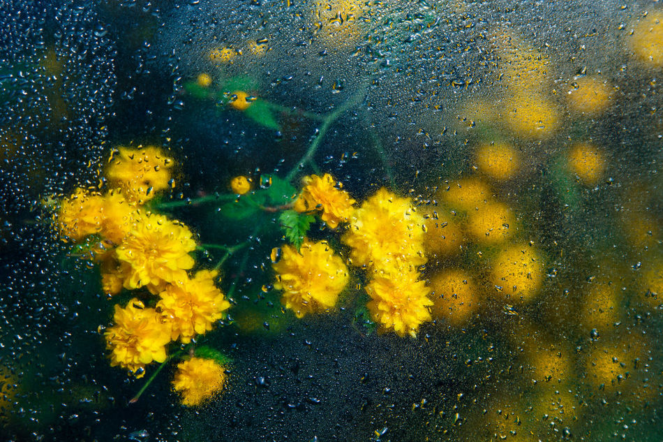 Beautiful stock photos of rain, Backgrounds, Blooming, Day, Flower