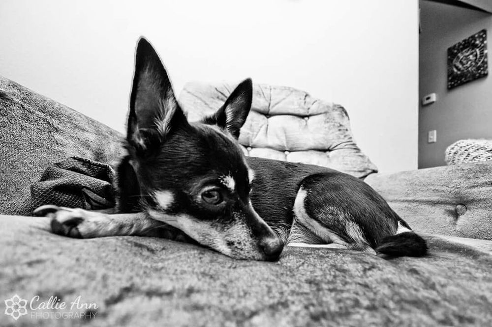 Friday morning photos. Dogslife Relaxing Fortcollins Colorado Blackandwhite OpenEdit EyeEm Best Shots EyeEmBestPics