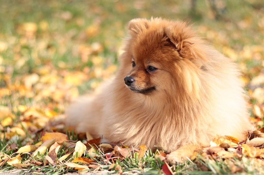 Animal One Animal Animal Wildlife Animals In The Wild Nature Outdoors Autumn Looking At Camera Animal Themes Beauty In Nature Freshness The Week On EyeEm Dogs Of EyeEm Dog❤