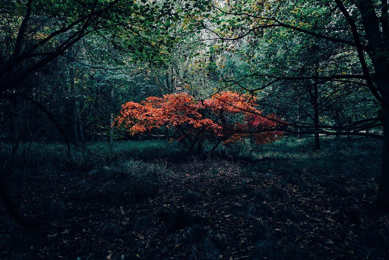 Tree Nature Beauty In Nature Landscape Season  EyeEm Best Shots EyeEm Gallery Autumn Autumn Leaves Autumn🍁🍁🍁 Outdoors Tranquility OpenEdit Autumn Colors Check This Out Forest Beautiful Photography Exploring Landscape_photography Eye Em Nature Lover Atmosphere Landscape_Collection Woods Beauty In Nature