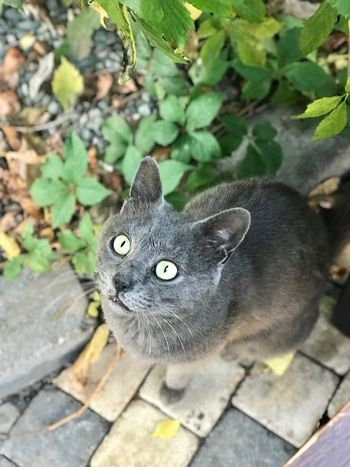 Cat Collection Nature Big Eyes Surprise Hungry Cat Give Me Food Please Autumn Autumn Leaves Animals Surprised Funny Best Look Feedme More And More🤗