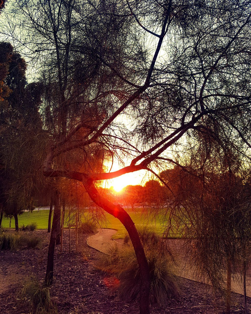 tree, tranquility, sunset, tranquil scene, nature, sun, beauty in nature, scenics, no people, branch, sunlight, bare tree, outdoors, growth, silhouette, forest, tree trunk, water, sky, day